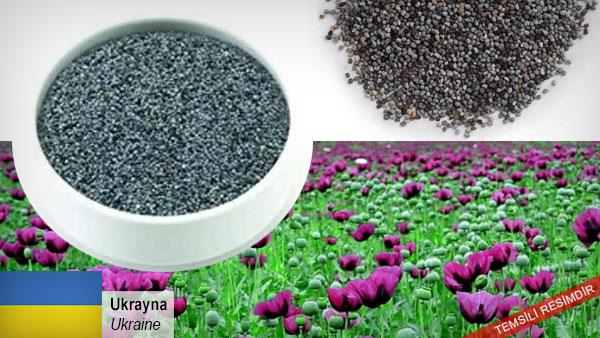 Blue-Poppy-Seed
