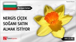 Bulgaristan, Nergis çiçek soğanı satın almak istiyor