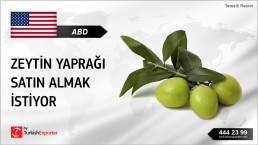 OLIVE LEAVES IN BULK BUY INQUIRY FROM USA