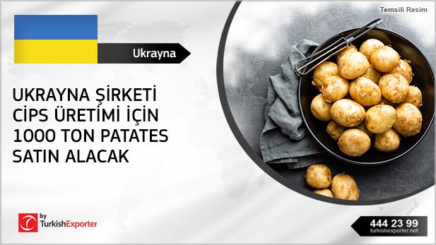 2597-Ukrayna-Patatesı,