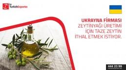 Fresh olives – import request – Ukraine